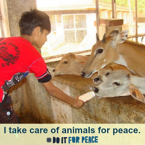 DIFP_Care for animals